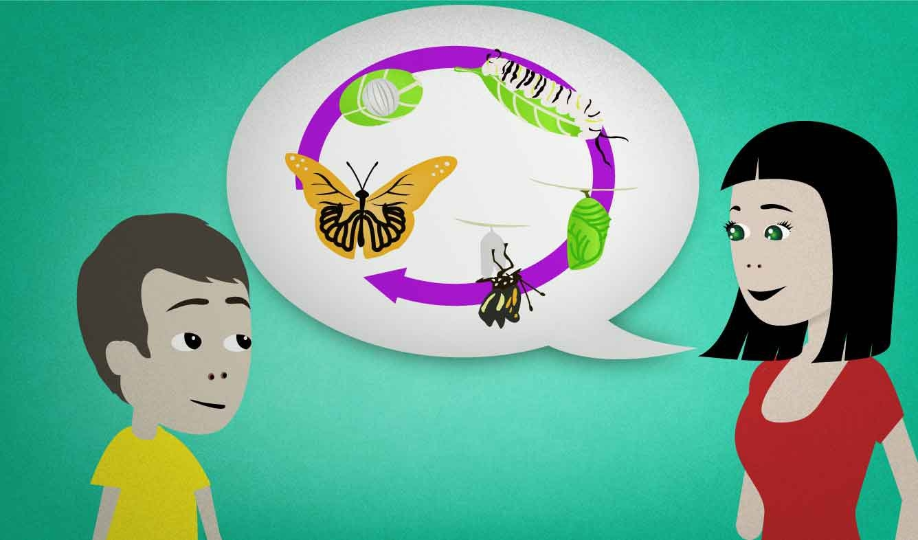 English Lesson: A lot of insects like butterflies and mosquitos go through a life cycle with several distinct stages.